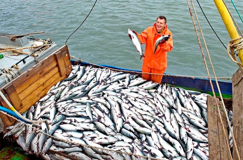 Минсельхоз РФ разработал план адаптации АПК и рыболовства к изменениям климата