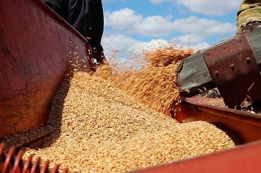 В России собрано 112,3 млн тонн зерна
