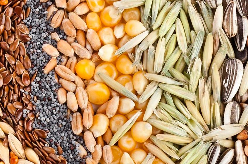 В России собрано 117,1 млн тонн зерна, год назад было 131,6 млн тонн